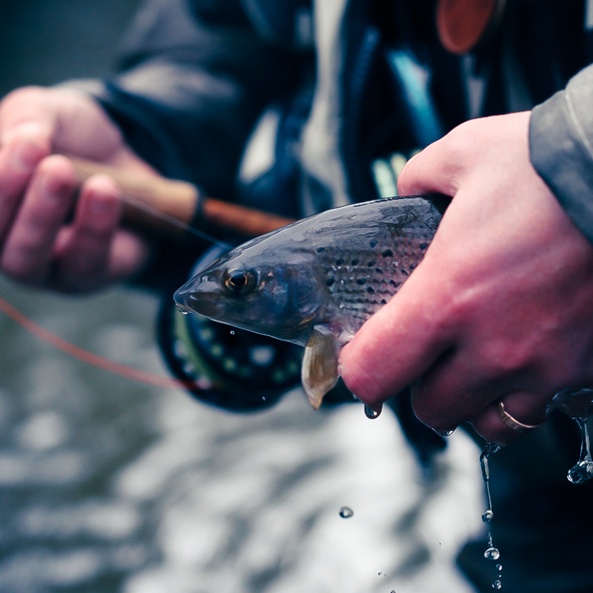 Winter Grayling fishing photo