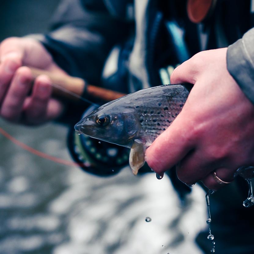 Winter Grayling fishing photo